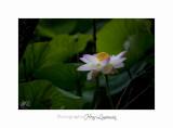 Nature Fontmerle 2014 Fleur IMG_7945.jpg
