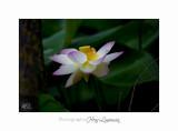Nature Fontmerle 2014 Fleur IMG_7947.jpg
