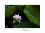 Nature Fontmerle 2014 Fleur IMG_7960.jpg