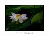 Nature Fontmerle 2014 Fleur IMG_7961.jpg