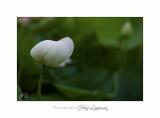 Nature Fontmerle 2014 Fleur IMG_7970.jpg
