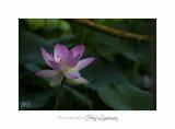 Nature Fontmerle 2014 Fleur IMG_7972.jpg
