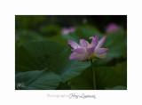 Nature Fontmerle 2014 Fleur IMG_7980.jpg
