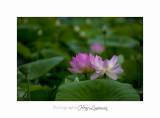 Nature Fontmerle 2014 Fleur IMG_7981.jpg