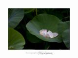 Nature Fontmerle 2014 Fleur IMG_7983.jpg