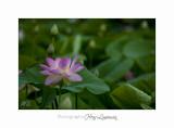 Nature Fontmerle 2014 Fleur IMG_7987.jpg