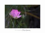 Nature Fontmerle 2014 Fleur IMG_7996.jpg