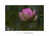 Nature Fontmerle 2014 Fleur IMG_8051.jpg