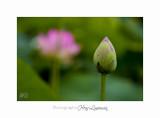 Nature Fontmerle 2014 Fleur IMG_8108.jpg
