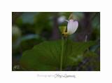 Nature Fontmerle 2014 Fleur IMG_8130.jpg