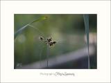 Nature Fontmerle 2014 IMG_7500.jpg