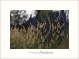 Nature Fontmerle 2014 IMG_7502.jpg