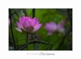 Nature Fontmerle Fleur 2014 IIMG_8014.jpg