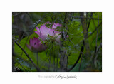Nature Fontmerle Fleur 2014 IMG_8015.jpg