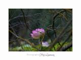 Nature Fontmerle Fleur 2014 IMG_8025.jpg