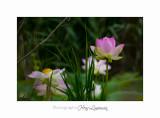 Nature Fontmerle Fleur 2014 IMG_8049.jpg