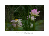 Nature Fontmerle Fleur 2014 IMG_8050.jpg