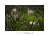 Nature Fontmerle Fleur 2014 IMG_8067.jpg