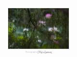 Nature Fontmerle Fleur 2014 IMG_8069.jpg
