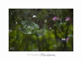 Nature Fontmerle Fleur 2014 IMG_8071.jpg