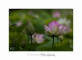 Nature Fontmerle Fleur 2014 IMG_8113.jpg