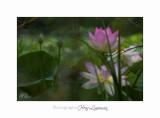 Nature Fontmerle Fleur 2014 IMG_8141.jpg
