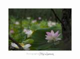Nature Fontmerle Fleur 2014 IMG_8149.jpg