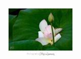 Nature fleur Fontmerle IMG_8790.jpg