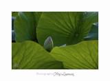 Nature fleur Fontmerle IMG_8837.jpg