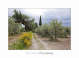 Camargue Baux de Provence IMG_6885.jpg