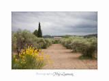 Camargue Baux de Provence IMG_6888.jpg