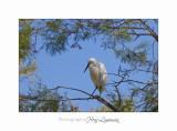 Nature camargue animal oiseau IMG_6445.jpg