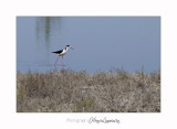 Nature camargue animal oiseau IMG_6566.jpg