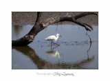 Nature camargue animal oiseau IMG_6620.jpg