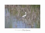 Nature camargue animal oiseau IMG_6641.jpg