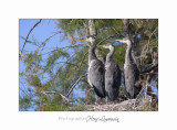 Nature camargue animal oiseau IMG_6700.jpg