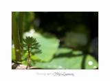 Nature jardin poterie IMG_7580.jpg