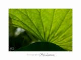 Nature jardin poterie IMG_7588.jpg