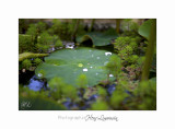 Nature jardin poterie IMG_7646.jpg