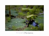 Nature jardin poterie IMG_7647.jpg