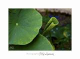 Nature jardin poterie IMG_7689.jpg