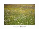 Nature Paysage Fleurs SALA IMG_8494.jpg
