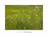 Nature Paysage Fleurs SALA IMG_8499.jpg