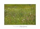 Nature Paysage Fleurs SALA IMG_8500.jpg