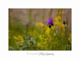 Nature Paysage Fleurs SALA IMG_8538.jpg
