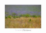 Nature Paysage Fleurs SALA IMG_8543.jpg