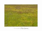 Nature Paysage Fleurs SALA IMG_8564.jpg