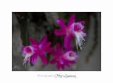 Nature jardin poterie IMG_7759.jpg
