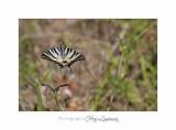 Nature animal Jardin Papillon IMG_8249.jpg