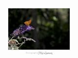 Nature animal Jardin Papillon IMG_8282.jpg